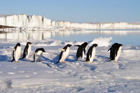 penguins_birds_arctic
